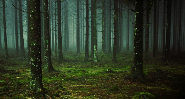 gloomy green forest november horoscopes