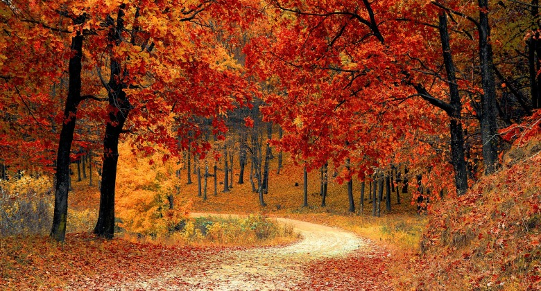 october horoscopes autumn trees