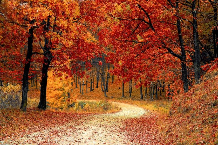 october horoscopes autumn trees